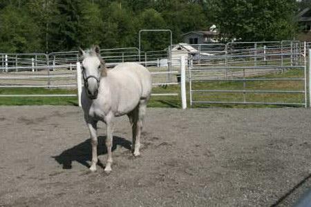 Horses love HoofGrid